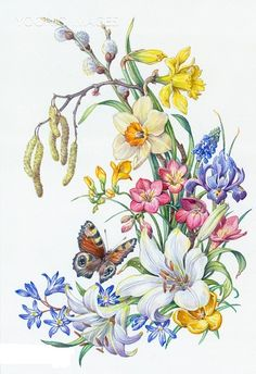 Yooniq images - Peacock Butterfly with Daffodils, Lily, Iris etc Botanical Flowers, Botanical Prints, Art Floral, Butterfly Art, Flower Art, Fabric Painting, Painting & Drawing, Watercolor Flowers, Watercolor Paintings