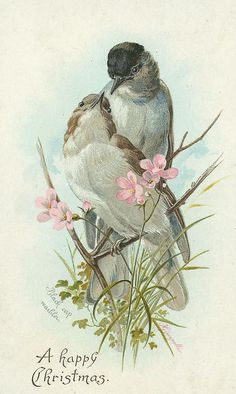 """Pair of """"black-capped warblers"""" with pink flowers."""