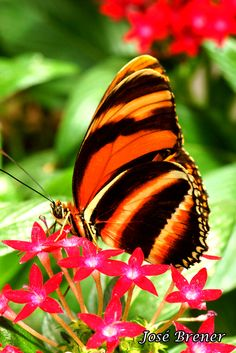 beautiful colors!!  ~Butterfly