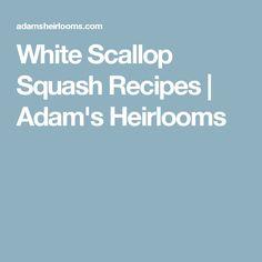 White Scallop Squash Recipes | Adam's Heirlooms