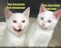 This kitty has cheese burger