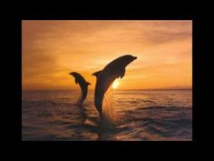 """MUSIC VIDEO: """"Southern Cross"""" - by - Crosby Stills & Nash - (Remastered/lyrics) - YouTube. (So appropriate for New Zealand. View the Dolphins as you see them here at Kaikoura in the South Island. Check out what's written underneath this on YouTube - using the power of the universe to heal your wounds ....)"""