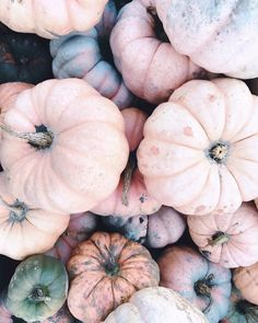 """1,556 Likes, 11 Comments - Sarah Knuth (@sarahknuth) on Instagram: """"#nationalpumpkinday #ithinkthesearegourds"""""""