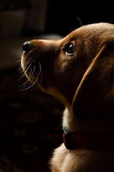 """""""Look At That Face! #canine #dog #portrait"""""""