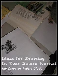 Handbook of Nature Study: Ideas for Drawing In Your Nature Journal. Updated links in this list of resources for drawing in your nature journal.