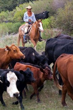 Cattle Drive Vacations & Locations - Rockin' R Ranch