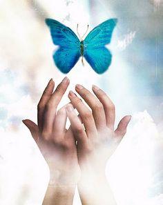 Teal Butterfly ~ Ovarian Cancer Awareness