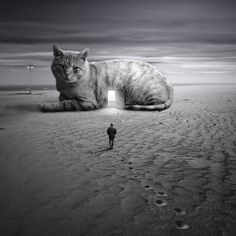 Surreal Portraits Of Animals Traveling The Earth   Bored Panda