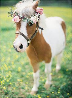 horsie! Mini Horses, Baby Horses, Mini Shetland Pony, Shetland Ponies, Donkeys, Girl With Flower Crown, Flower Crowns, Flower Girls, Horse Flowers