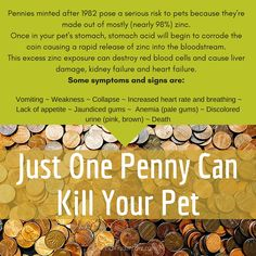 Just one penny could kill your pet. Keep your dogs and cats safe. We all have that spare change hanging around the house that sometimes falls on the floor. I know we are going to be more careful. #donnavincentbiz #livenaturallyforhealth