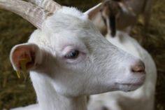 visit goats, wolves. lava boulders, etc in Eifel