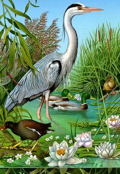 Various animals illustrations
