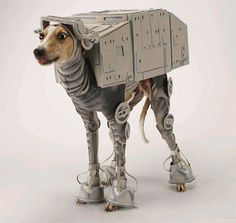 15 Dogs Dressed as Star Wars Characters