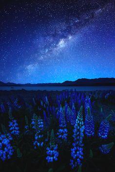 reals: Midnight Blue | Photographer