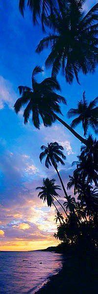 Coconut grove Molokai Hawaii http://www.hawaiiactive.com/activities/molokai-discovery.html