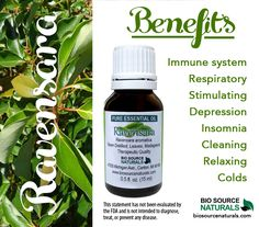 Ravensara Pure Essential Oil benefits are analgesic, antibacterial, antiseptic, diuretic, expectorant, antiviral, and stimulant properties. #aromatherapy