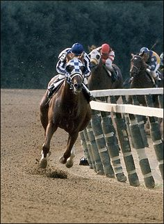 A beautiful color photo of the great Secretariat in his memorable Belmont Stakes run of Wow! All The Pretty Horses, Beautiful Horses, Animals Beautiful, Cute Animals, Faster Horses, Derby Horse, Triple Crown Winners, Thoroughbred Horse, Clydesdale Horses