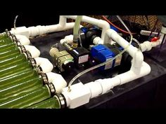 Algae Grows In Artificial Light - YouTube
