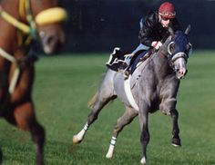 Canadian Horse of the Year Izvestia (CAN)