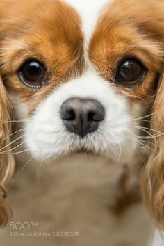 Poppy the dog close up by MattGould #animals #animal #pet #pets #animales #animallovers #photooftheday #amazing #picoftheday