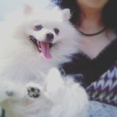 Gm😘😘 . . #fun#likes#pet#love#daily#japan#tokyo#dogstagram#dog#DoggytheWorld#pomeranian#pomeranianworld#dogoftheday#photography#犬#日常#ポメラニアン#愛犬#老犬#11歳#ふーちゃん#포메라니안#일본#도쿄#좋아요#애견#데일리룩#일상#개스타그램