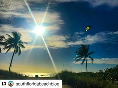 """Credit to #southfloridabeachblog  ・・・ """"Either you decide to stay in the shallow end of the pool or you go out into the ocean"""" #christopherreed #sofloliving #fun_in_fl #fun_in_florida #pocket_beaches #upsideofflorida #sun_and_beach_sb #loves_shores #photo_beaches #HollywoodTapFL #HollywoodFlorida #HollywoodFL #HollywoodBeach #DowntownHollywood #Miami #FortLauderdale #FtLauderdale #dania #daniabeach #Aventura #Hallandale #hallandalebeach #Pembrokepines #miramar #broward  (at The Beautiful…"""