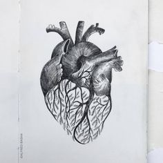Heart and Branches. Diverse Black and White Surreal Drawings. By Alfred Basha. Bird Drawings, Pencil Drawings, Alfred Basha, Branch Drawing, Black And White Sketches, Art Inspo, Small Tattoos, Surrealism, Moose Art