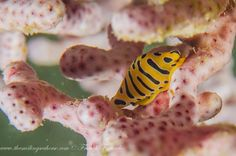 liveaboard diving trip to the south of Mergui Archipelago in Burma