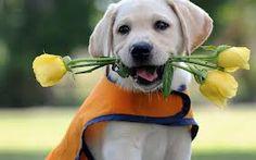 Afbeeldingsresultaat voor gele rozen