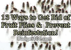 13 Simple tips- How to Get Rid of Fruit Flies & Prevent Reinfestation
