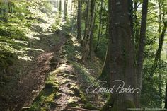 Motive finden - Conrad Amber Country Roads, Plants, Woodland Forest, Landscape, Nature, Flora, Plant, Planting