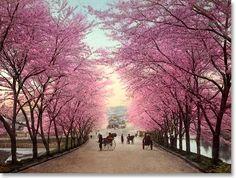 Frühling auf japanisch