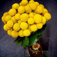DESCRIPTION:  NAME: Billy Buttons  OTHER COMMON NAMES: Wollyheads  SCIENTIFIC NAME: Craspedia Globosa  COLOR: Yellow  PLANT SEEDS: Outdoors after frost / Indoors weeks before last frost  PLANT HEIGHT: 18 - 24  PLANT SPACING: 3 - 6  BLOOM TIME: Late Spring - Fall  HARDINESS ZONE: 6 - 11  LIGHT REQUIREMENTS: Sun  SOIL & WATER PREFERENCES: Average  QUANTITY: 20 Seeds  OTHER: Billy Buttons are very popular with florists for cut flowers. They also make excellent dried flower because they ...