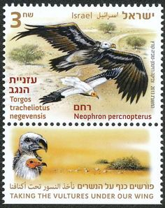 Lappet-faced Vulture stamps - mainly images - gallery format