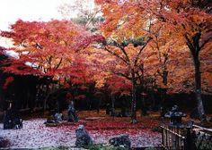 Fukuoka, Japan (would love to visit my dear Pen Pal Yumiko in Fukuoka!)