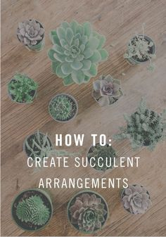 How To: Create the cutest succulent arrangement for your dorm!