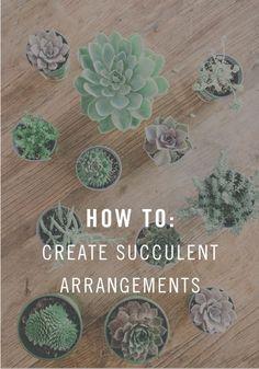 How To: Create the cutest succulent arrangement for your dorm!