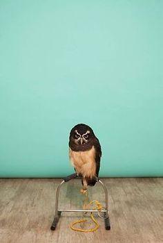 Episode 3 in An Owl An Hour; featuring Kirk Adams II