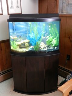 54 gallon corner aquarium with a custom built stand our for How many gallons in a fish tank calculator