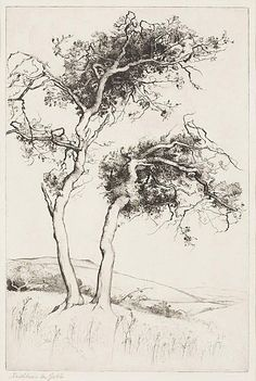 landscape trees drawing - Google Search