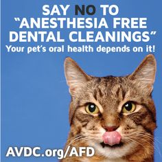 When it comes to pet dental health, the risks of periodontal disease and oral health problems due to lack of proper dental care far outweigh the risk of anesthesia. #saynotoanesthesiafree http://avdc.org/AFD/risks-of-anesthesia-free-pet-dental-cleanings/