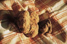 Os meses de outubro e novembro são especiais para a gastronomia italiana. Quando o outono transforma a paisagem do Hemisfério Norte, na Toscana, iniciam a caça à trufa branca - uma espécie de cogumelo subterrâneo, de aroma inconfundível. Saiba mais na www.flashesefatos.com.br