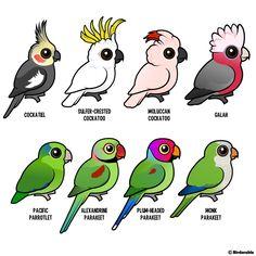 Birdorable cockatoos & parakeets