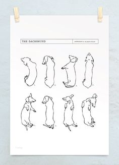 A3 Dachshund Sleep Study Art Print. Illustrations of my pet dachshund's sleeping postions in black on white. $45.00, via Etsy.