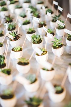 Let Love Grow - Succulent Favors that Double as Escort Cards! | Palmero Photography on @myhotelwedding