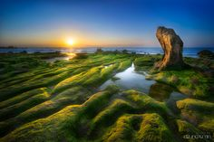 Stone turtle waiting sunrise. Beautiful sunrise moment at Co Thach beach, Tuy Phong district, Viet Nam.   More photos please visit :  http://dzungtranphotography.com ##sun ##rock ##stone ##turtle ##moss ##sunrise ##cothach##sun ##rock ##stone ##turtle ##moss ##sunrise ##cothach Photographer: Dzung Tran