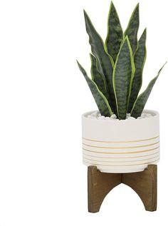 "Flora Bunda Artificial Succulent Faux Plant 12"" H Snake Plant in 4.75"" - Modern Design Fake Plants Decor, Ivy Plants, Real Plants, Faux Plants, Plant Decor, Indoor Planters, Diy Planters, Ceramic Planters, Artificial Grass Rug"