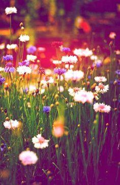 //Lovely Flowers