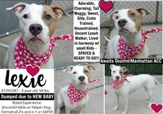 THEY KILLED ME; MY HEART IS BROKEN - LEXIE ON DEATH ROW TODAY - 11/12/16