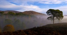 Autumn morning Am Meallan, Glen Affric: Jim McAuley